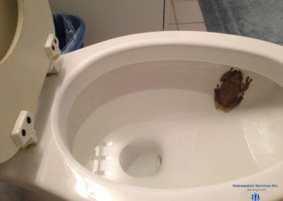 HWSE - Frog In Toilet